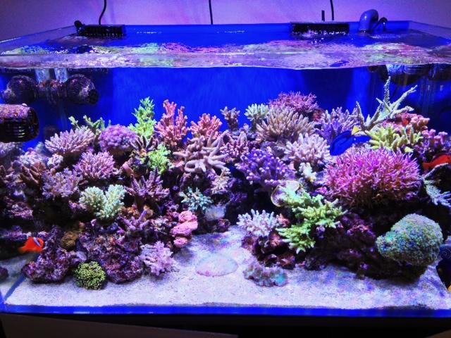 Prefazione reef aquarium for Acquario marino