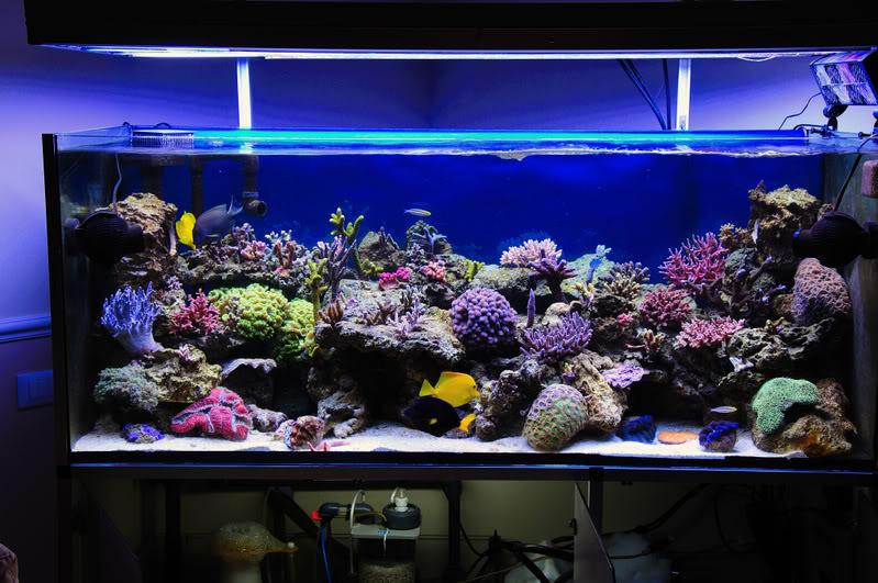 Guida all 39 allestimento di un acquario marino tropicale for Cerco acquario per tartarughe usato
